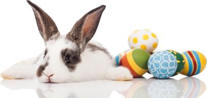 eva-scholz-slider-vip-aktion-2019-04-bunny.png
